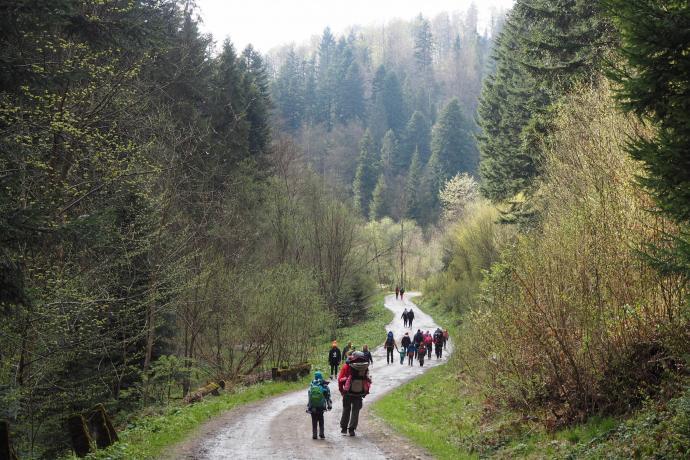 Droga do Łopienki uroczo wije się doliną potoku