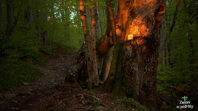 W lesie jest ciepło i dalej pięknie