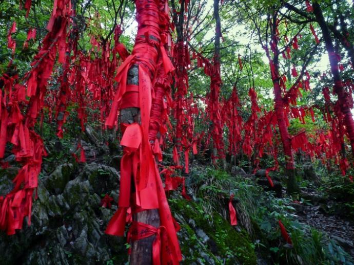 Wstążki na drzewach