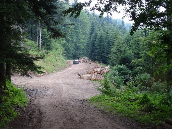 Droga leśna łącząca Obidzę z Przełęczą Przysłop