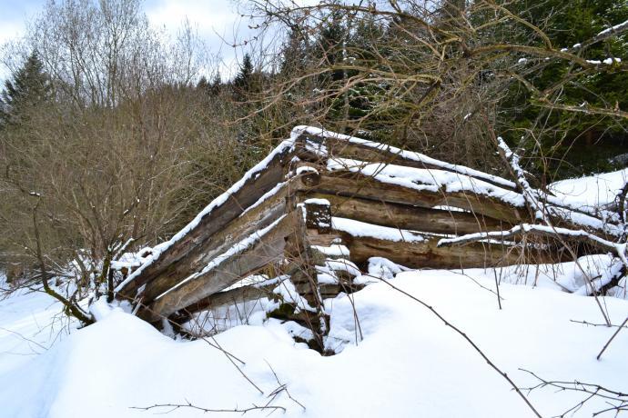 Pozostałości szałasu na zarastającej polanie