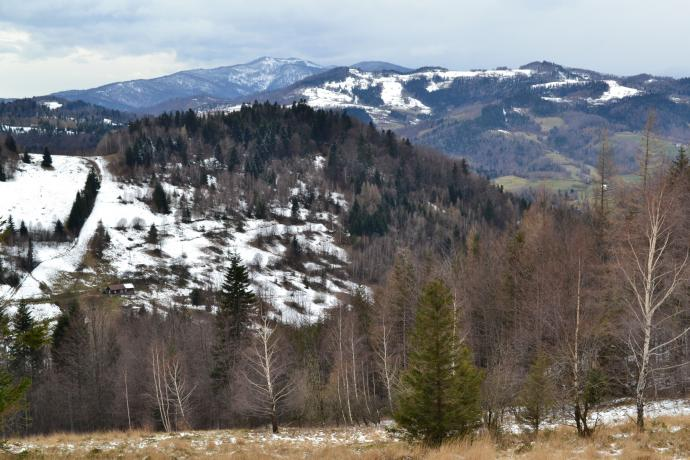 W drodze na Przehybę zielonym szlakiem od Łazów Brzyńskich. Widok na Lubań z niewielkiej polany pod Będzikówką