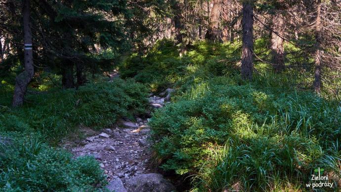 Zielony szlak na Rówień Waksmundzką