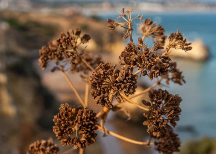 ''Zielona'' Roślinność nad wybrzeżem