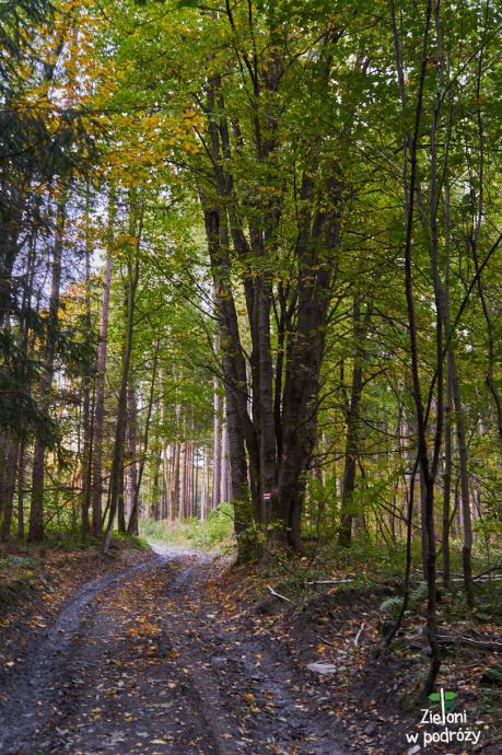 W lesie jest już kolorowo. Wyżej będzie jeszcze ładniej