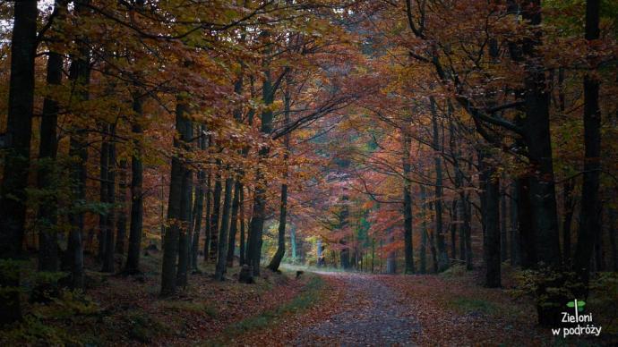 W lesie jeszcze ciemno