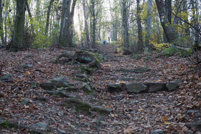 Wejście na szczyt Wieżycy prowadzi całkiem stromymi kamiennymi schodami.