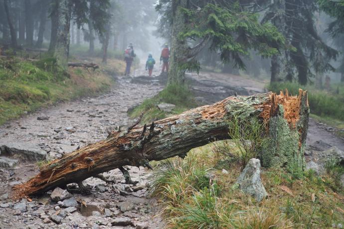 Las zapewnia chwilową ochronę przed silnymi podmuchami wiatru