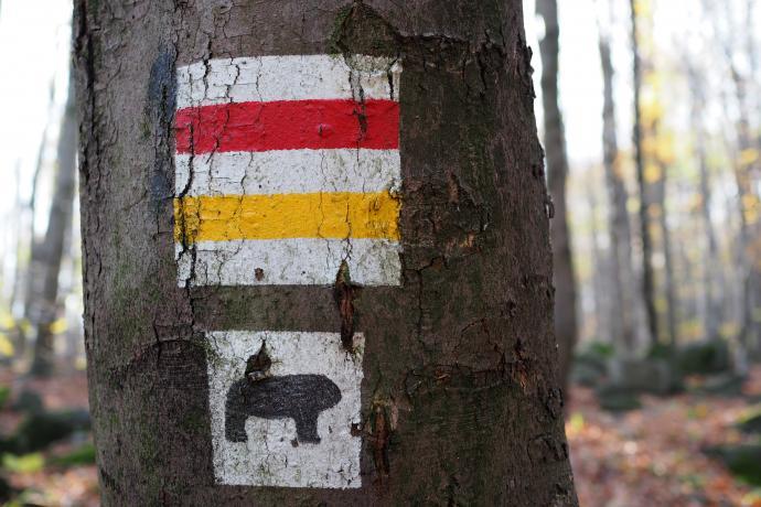 Charakterystyczny symbol niedźwiedzia towarzyszy szlakom na Ślężę
