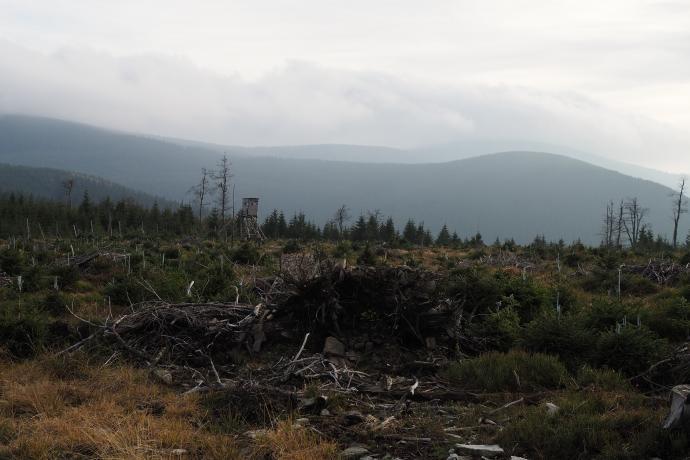 Lasy zniszczone przez zanieczyszczenia związkami siarki . Obecnie robi się nowe nasadzenia.