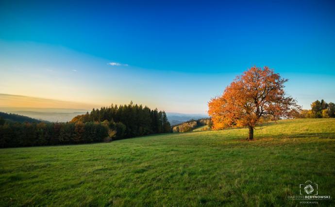 Jesienna czereśnia