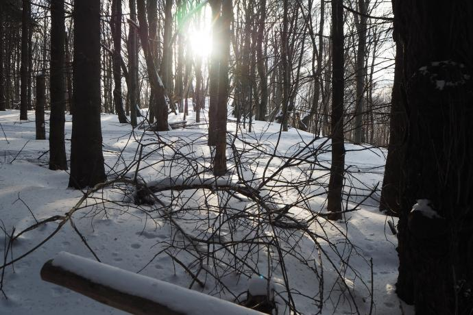 Nawet w lesie towarzyszy nam piękne słońce.