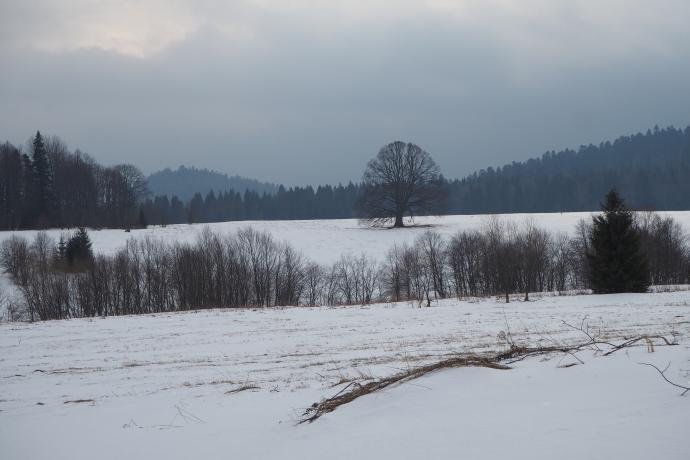 W krajobrazie wyróżnia się kilkusetletnia lipa