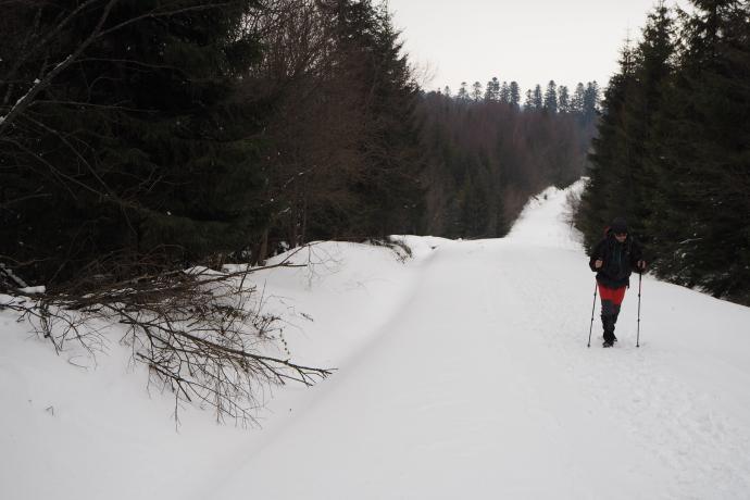 Ścieżka ponownie doprowadza do utwardzonej drogi