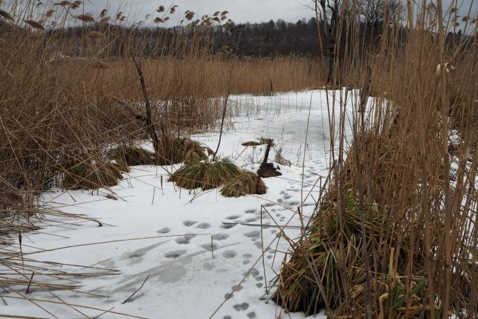 Lód, niestety, za cienki, żeby po nim chodzić...