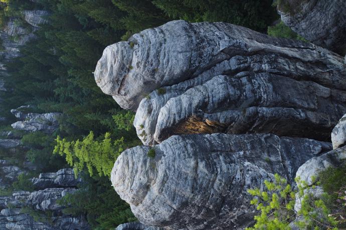 Piaskowcowe  skały mają tu ponad 100 m wysokości.
