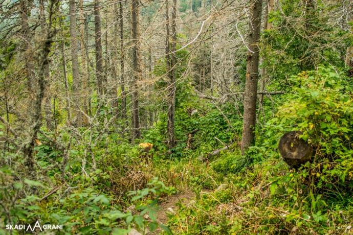 Szlak przybrał bardziej leśny charakter.