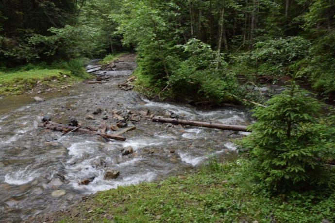 Wzburzone potoki górskie w Gorganach