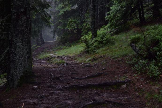 Stary las