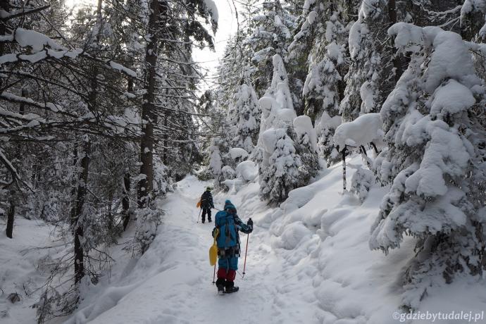Droga wspina się coraz stromiej przez pięknie zaśnieżony las.