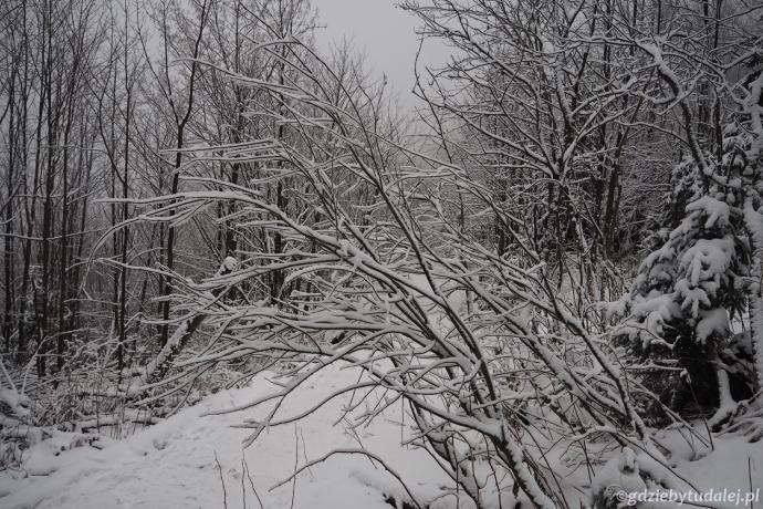 Piękna zima w okolicach Czerwonej Przełęczy