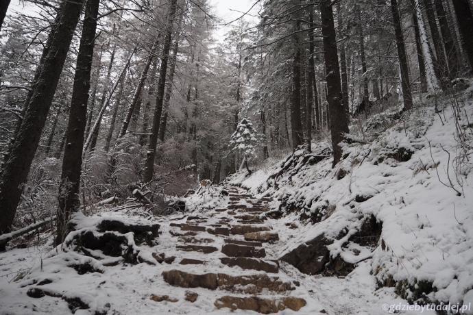 Szlak schodzi stromo w dół w kierunku Polany Strążyskiej