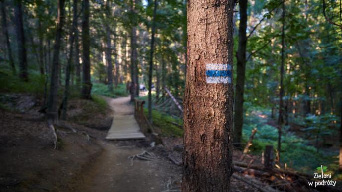Spacer przez las