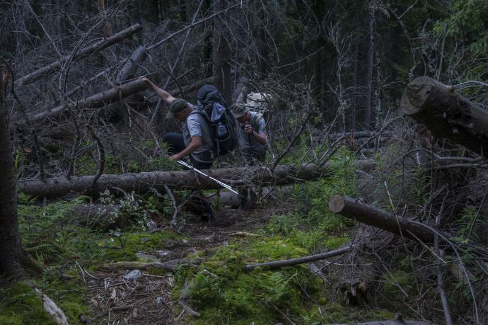 Podejście przez las