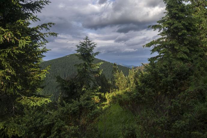 Powyżej lasu