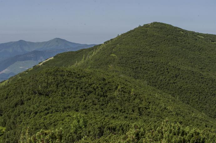 Widok na Gorgany z rejonu Koretwiny