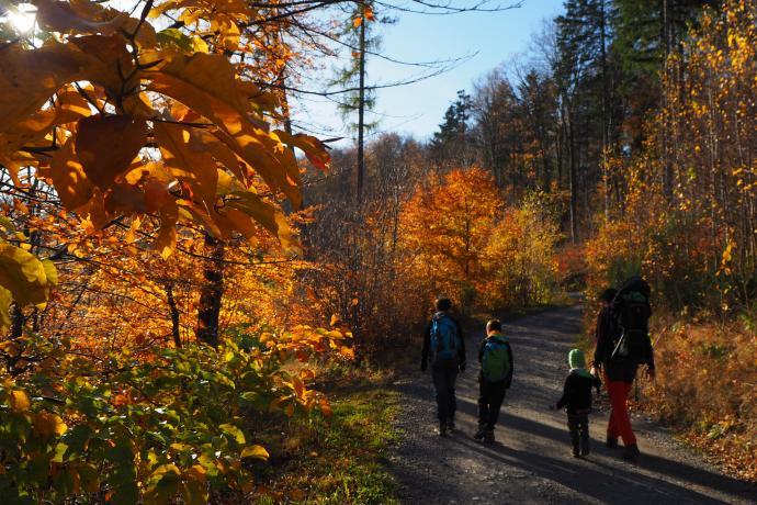 Początkowo droga prowadzi przez las.
