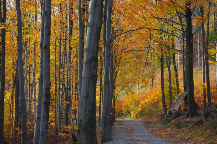 Szlak prowadzi przez piękny las o zróżnicowanym drzewostanie.