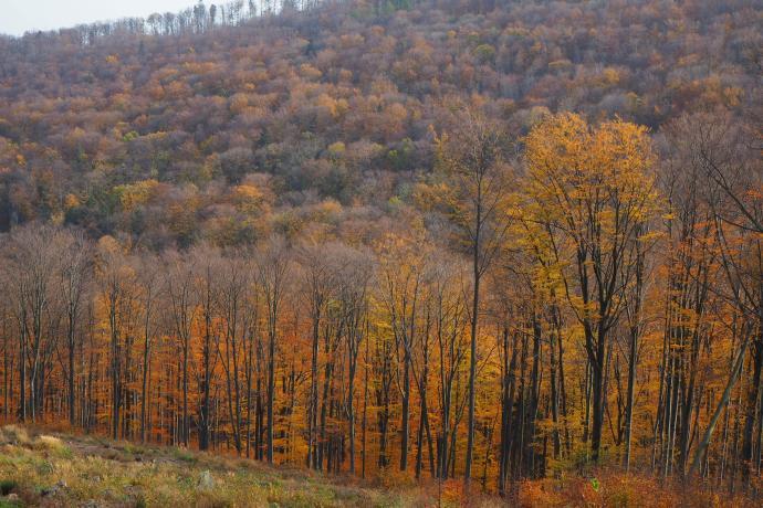 Późna jesień też potrafi być piękna.