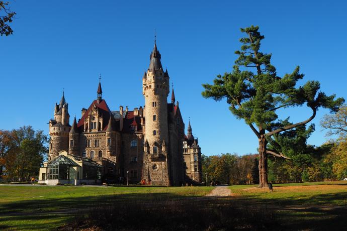 Zamek wraz z piękną sosną wejmutką.