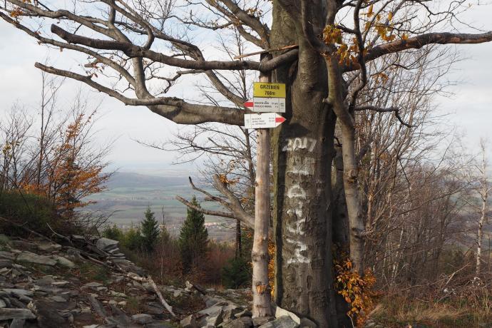 Tu w zejściu szlak czerwony opuszcza granicę polsko-czeską.
