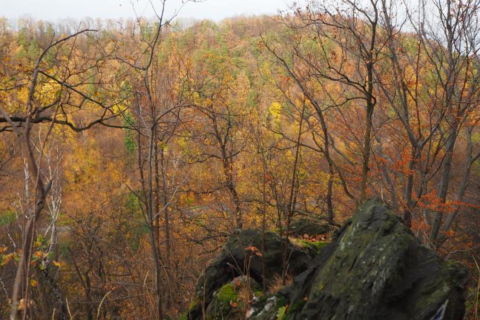 Z okolic Karlików też pięknie widać otoczenie Doliny Złotego Potoku.