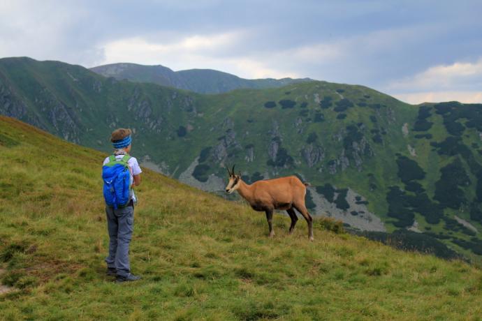 W tej części Tatr Niżnych więcej jest kozic niż turystów