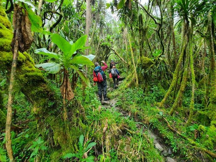 Przez dżunglę do Mutinda Camp