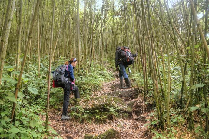 W lesie bambusowym