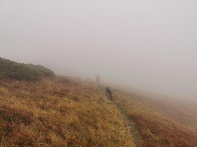 Wędrówka we mgle