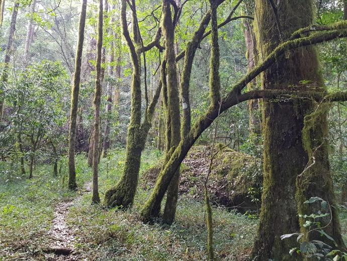 Szlak w lesie tropikalnym