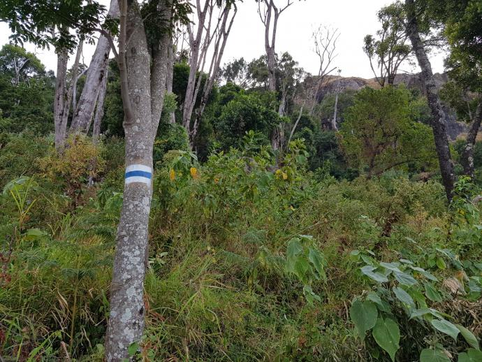 Oznakowany szlak w górach Kadam