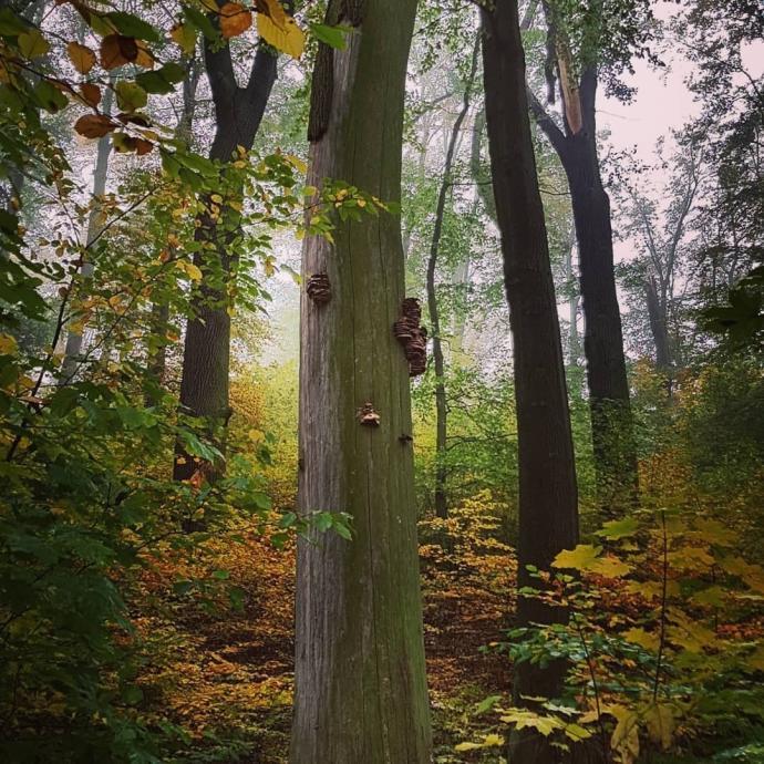 Leśne cuda