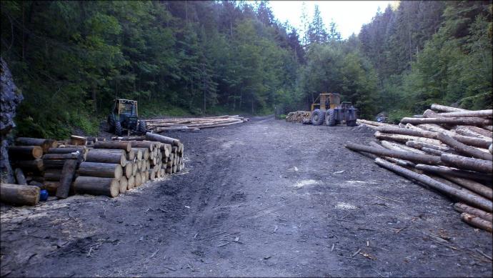 Rabunkowa gospodarka leśna TPN w Dolinie Olczyskiej
