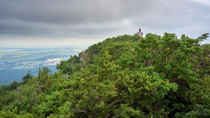 Wieża Kościoła zza drzew