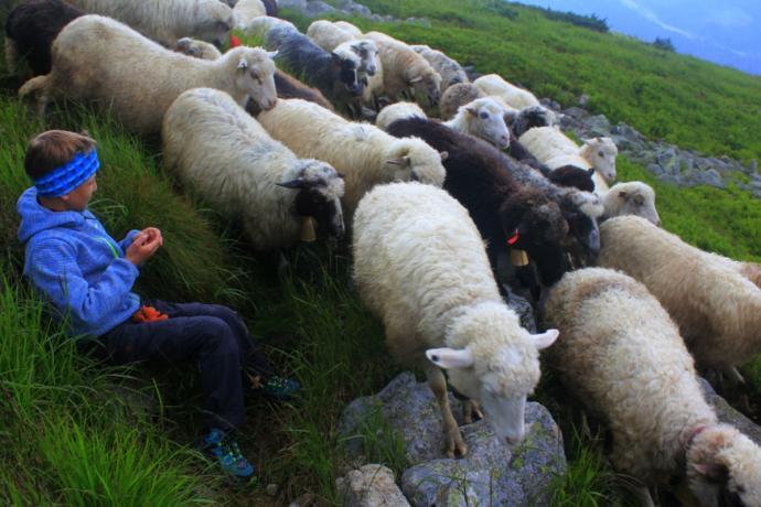 W czasie wędrówki często napotykaliśmy się na wypas owiec, krów i koni.
