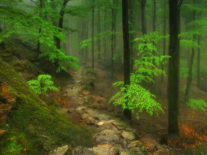 Przełęcz Żarska