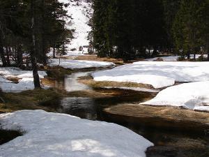 Meandry Łaby podczas wiosennych roztopów