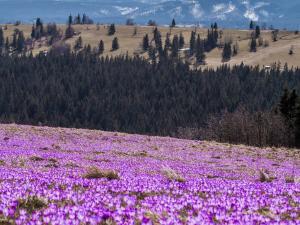 Wiosna na Podhalu!