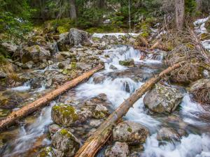 Potok w Lesie Gąsienicowym